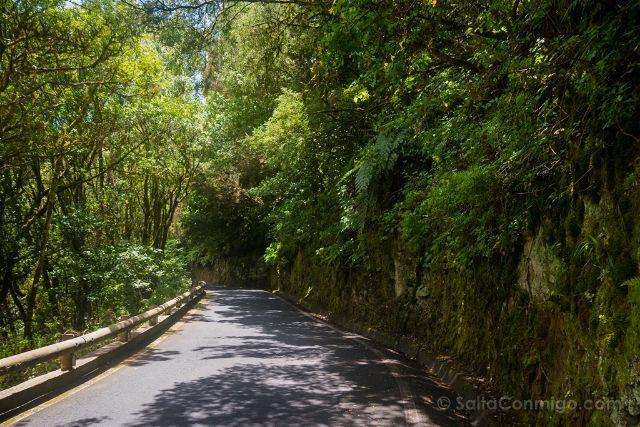 Canarias Tenerife Parque Rural Anaga Carretera