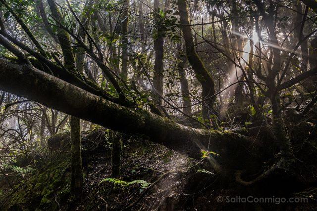 Canarias Tenerife Parque Rural Anaga Sendero Sentidos Sol