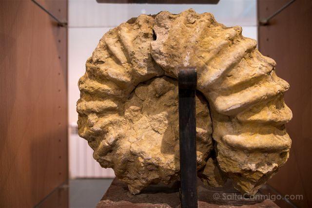Castellon Els Ports Forcall Fosil