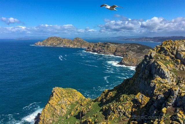 Galicia Islas Cies Vista Faro Gaviota