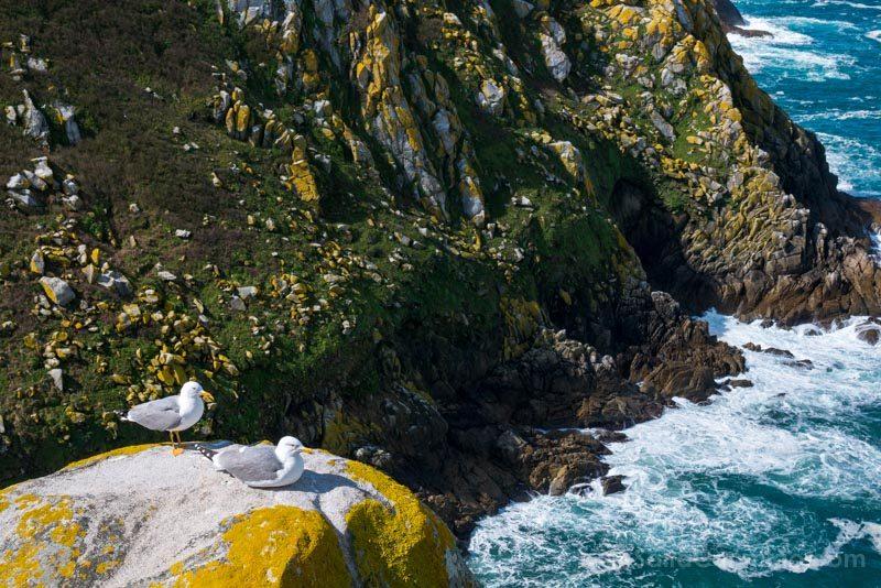 Islas Cies Galicia Gaviotas Acantilados