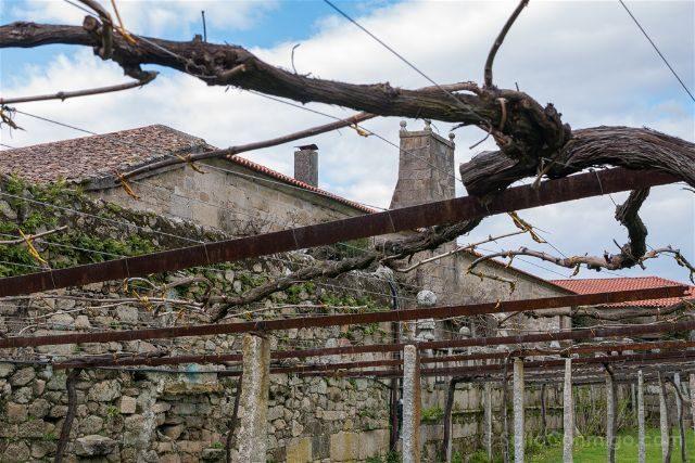 Galicia Pontevedra Rias Baixas Cambados Pazo de Fefiñanes Albariño