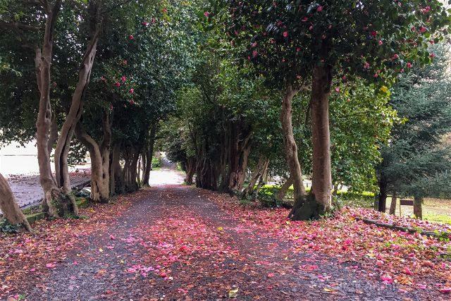 Galicia Rias Baixas Pazo Lourizan Petalos Camelias Camino