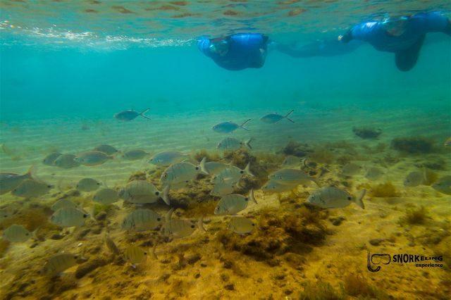 Las Palmas de Gran Canaria Playa Las Canteras Snorkeling Adventure Fondo