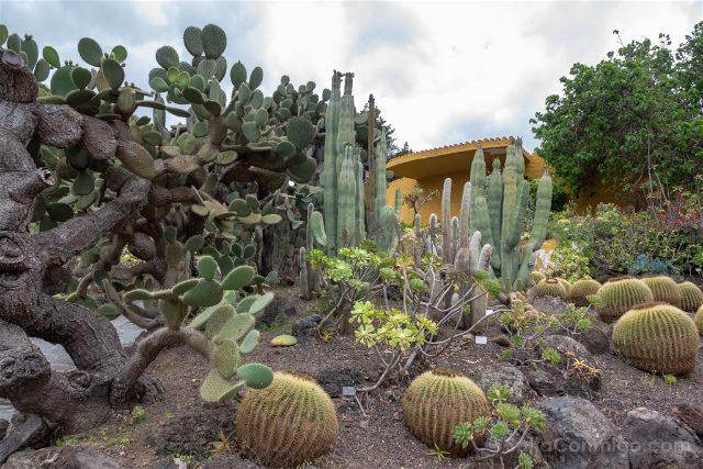 Las Palmas de Gran Canaria Jardin Canario Cardon