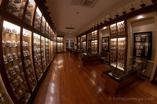 Las Palmas de Gran Canaria Museo Canario Sala Calaveras