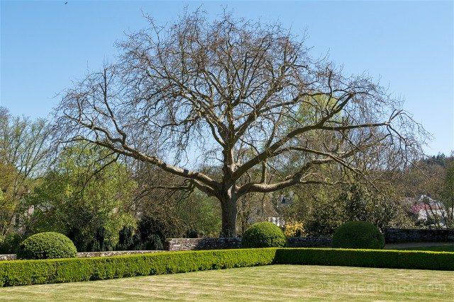 Que ver en Josselin Bretana Castillo Jardin Frances Cedro