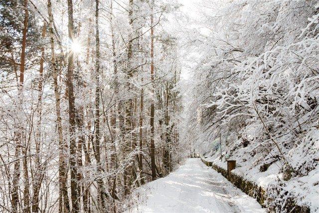 Monasterio de Rila Alrededores Bosque Nevado Camino