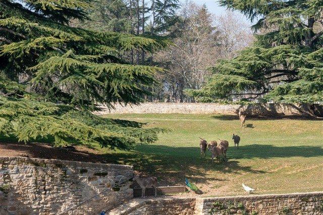 Que ver en Pamplona Jardin Taconera Ciervos