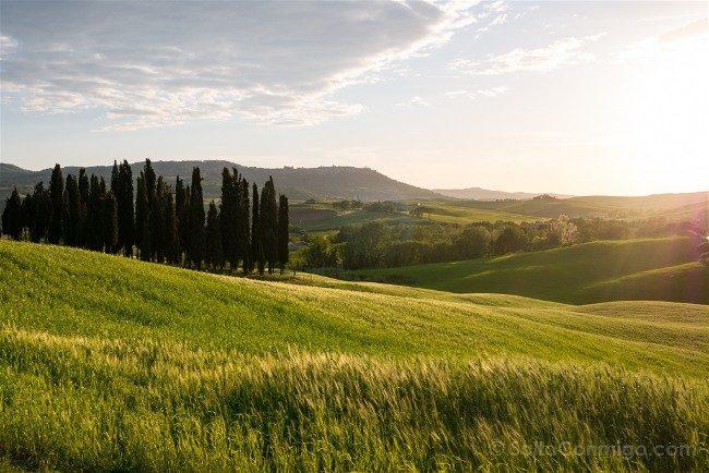 Ruta por la Toscana Paisaje Cipres Atardecer