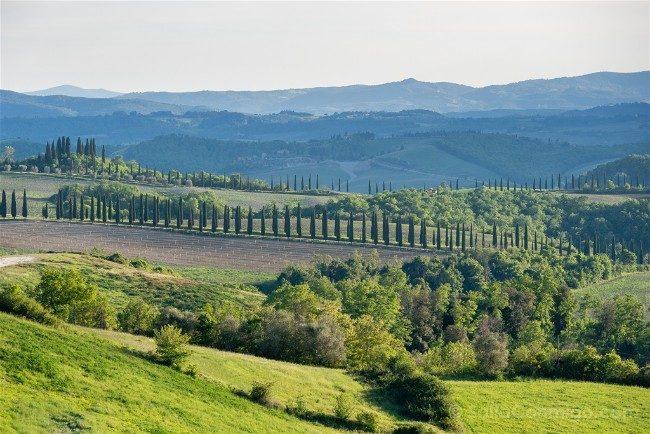 Que ver en la Toscana Paisaje Filas Cipreses