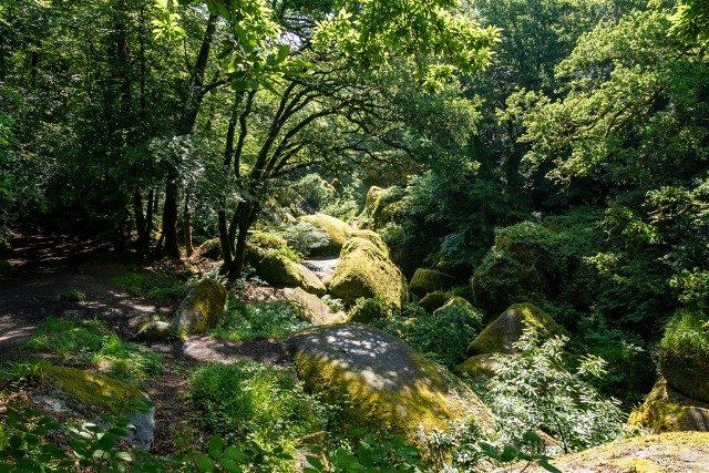 Bosque de Huelgoat Caos Arboles
