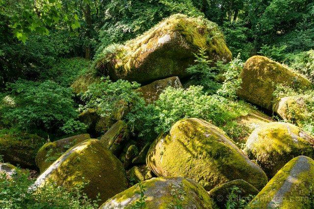 Bosque de Huelgoat Caos Musgo