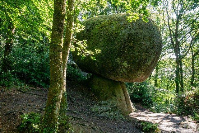 Bosque de Huelgoat Champinon
