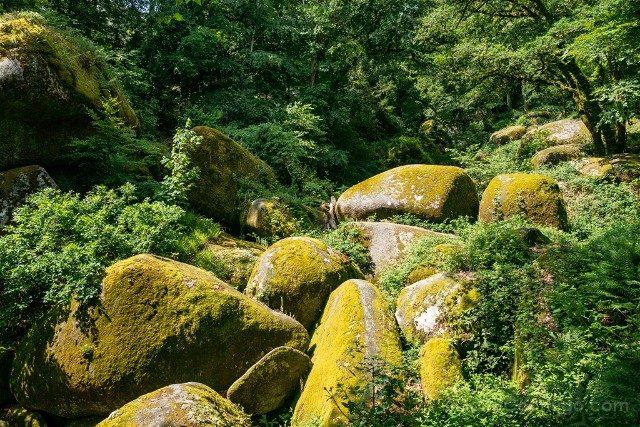 Bosque de Huelgoat Rocas Amarillas