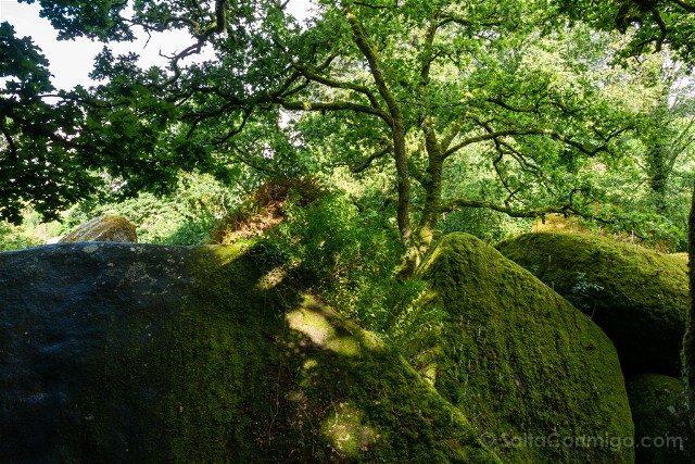 Bosque de Huelgoat Rocas Musgo Arboles