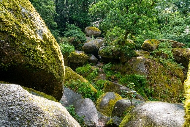 Bosque de Huelgoat Rocas