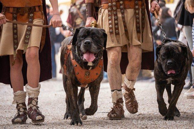 Que Ver en Roma Natale di Roma Perros