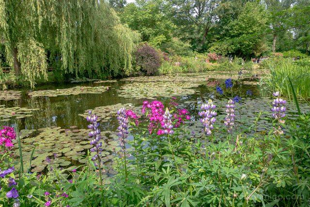 Giverny Jardin Japones Campanillas