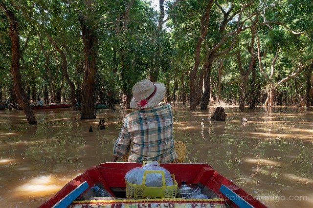 Que hacer ver Siem Reap Tonle Sap Kompong Pluk Bosque Arboles Petrificados