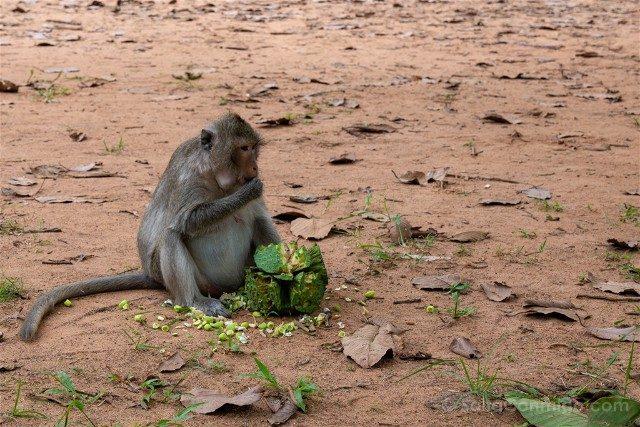 Templos de Angkor Mono
