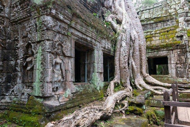 Templos de Angkor Ta Prohm Arbol