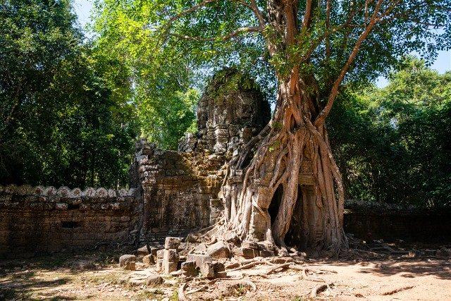 Templos de Angkor Ta Som Arbol