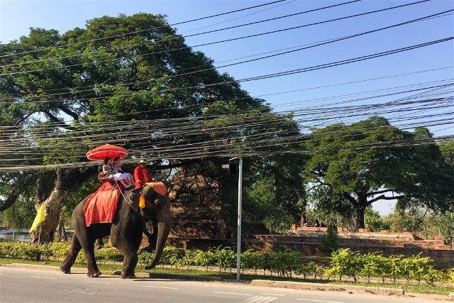 Que Ver en Ayutthaya Elefante