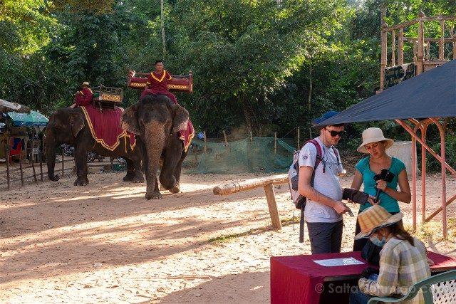 Viajar a Camboya Elefantes