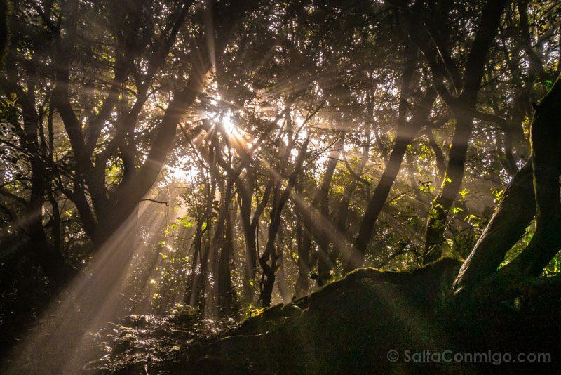 Escapadas Por Espana Tenerife Parque Rural Anaga