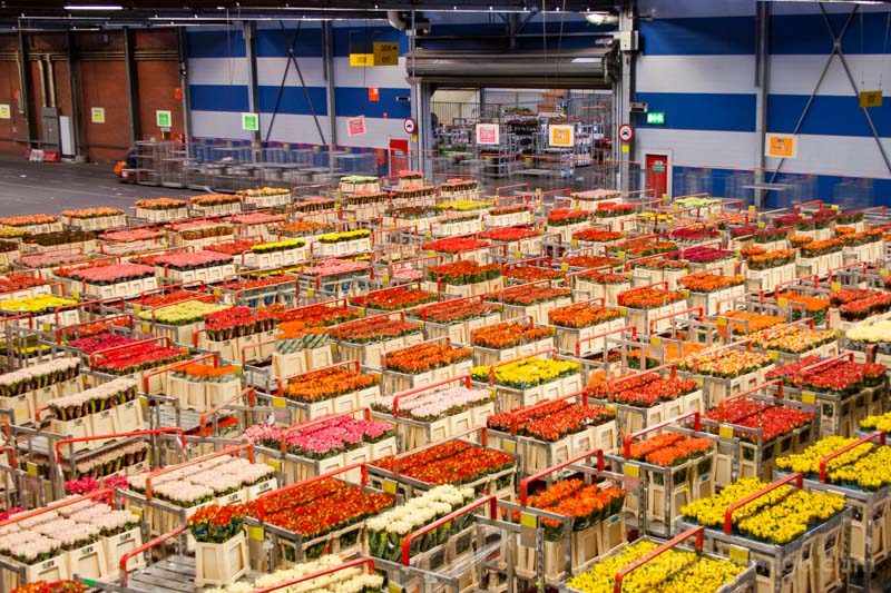 Aalsmeer Amsterdam Paises Bajos Holanda Mercado Flores