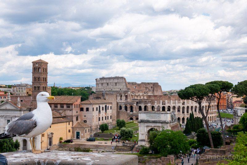 Miradores de Roma Palatino Coliseo Gaviota