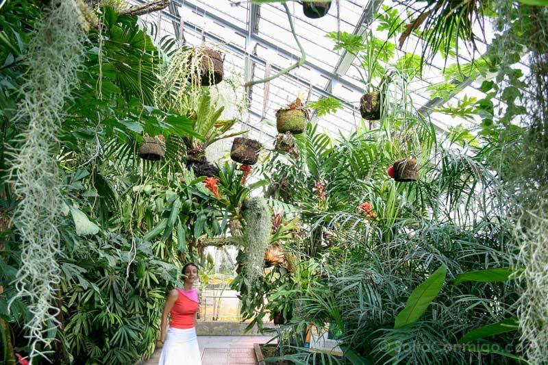 Parques Madrid Real Jardin Botanico Invernadero Sara