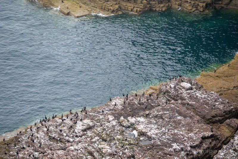Cabo Frehel Bretana Aves