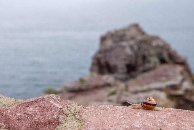 Cabo Frehel Bretana Caracol