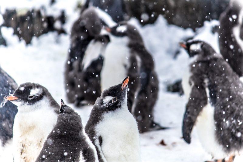 Momentos Viaje Pinguinos Antartida
