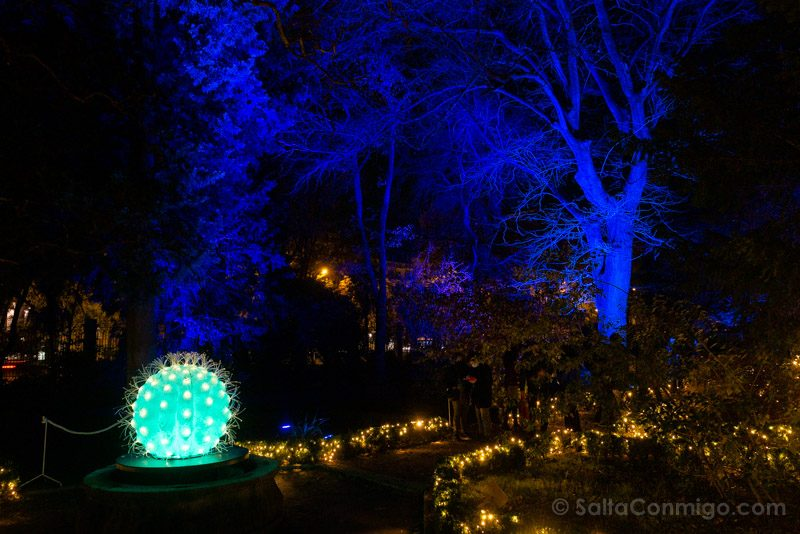 Luces Navidad Jardin Botanico Cactus