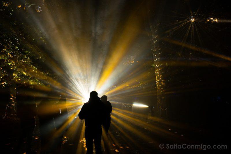 Luces Navidad Jardin Botanico Luz