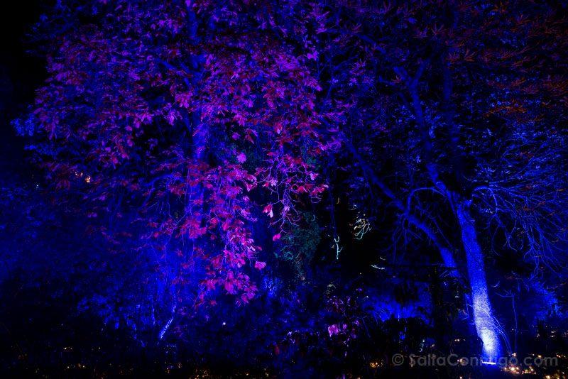 Luces Navidad Jardin Botanico Morado