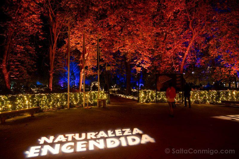 Luces Navidad Jardin Botanico Naturaleza Encendida