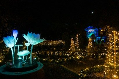 Luces Navidad Jardin Botanico Paisaje