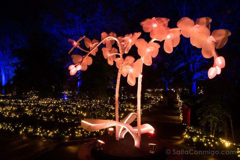 Luces Navidad Jardin Botanico Planta