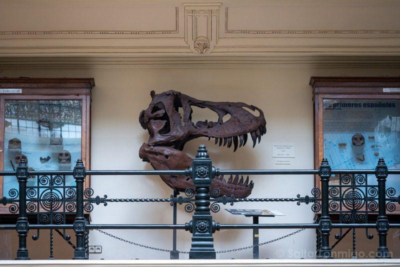 Que Ver En Chamberi Museo Geominero Replica Craneo Tiranosaurio Rex