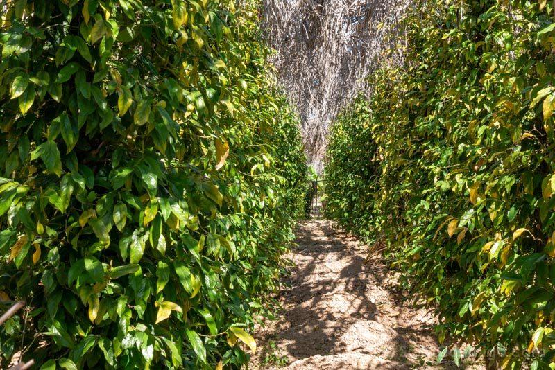 QueVer En Kampot La Plantation Plantas