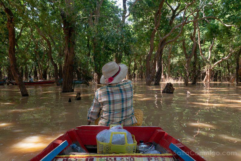 Excursiones Siem Reap Tonle Sap Pueblo Bosque Arboles Petrificados