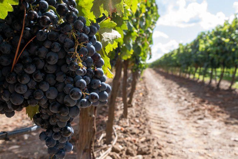 Bodegas En Toro Ruta Vino Bodega Divina Proporcion Tinta